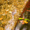 Weir<br /> <br /> I love this - the gentle flow, the little weir and leaves.