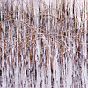 Hoops and Straights<br /> <br /> Freeezing day, I was absorbed by the shapes and the form in this small patch of reeds on a frozen loch