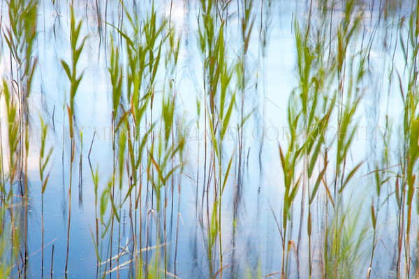 Green and Blue<br /> <br /> Gently swaying reeds - a soft lilt and a sense of belonging.