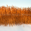 Bed of Reeds<br /> <br /> I love the contrast of the winter-lit bed of reeds and the starkness of the ice bound loch
