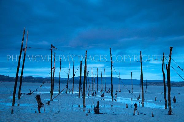 Evening Stakes<br /> <br /> Fishing stakes in the Wigtown Estaury in the dying winter light