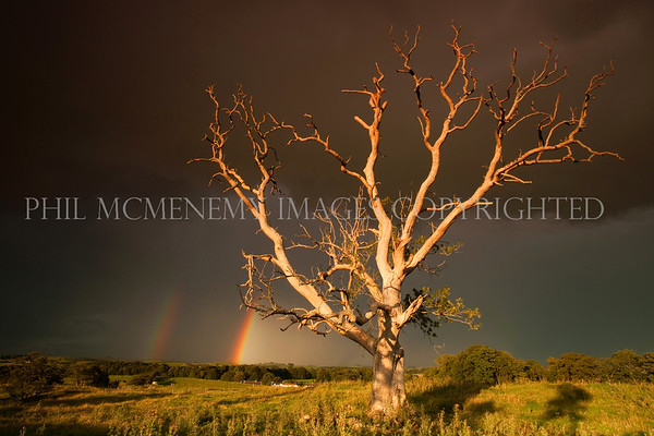 Storm Tree and Rainbows<br /> <br /> i sometimes think this image is too much, too much to take in and comprehend and for ages I held it back (as I do with lots of my images) until I felt it OK to share
