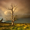 Storm Tree<br /> <br /> Quite possibly the best light I have experienced while at work......so good it made me physically drool with pleasure and anticipation! The scene was biblical with a huge, angry, storm front moving from the east, I got a soaking.