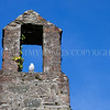 Bell Tower<br /> <br /> A dove sits and waits in the bell tower of the tiny chapel at Anwoth
