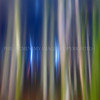 Upwards<br /> <br /> Trees reach for the light in their endless, or seemingly endless, quest for growth and density