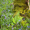 SPRINGTIME<br /> <br /> A verdant undergrowth as spring works its magic and.....let there be life!