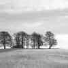 TreeLine<br /> <br /> Silent shrouded, freshly fallen snow