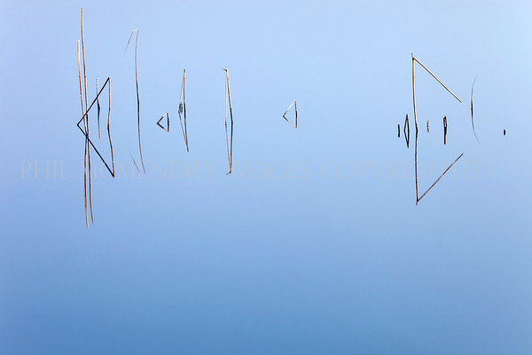 Messages<br /> <br /> Like inscribed letters and words these winter reeds appear to send us a message
