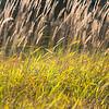 Lit Grass (ii)