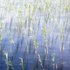 Reed Bed & Breeze