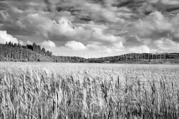 Clouds Skittering and Reeds Blowing<br /> <br /> A summers evening..........