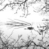 Branches......<br /> <br /> ......an image I remain unsure about - is it too cluttered, too busy? It was a cold, freezing cold, still and misty afternoon in early January