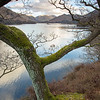 Ullswater Branches