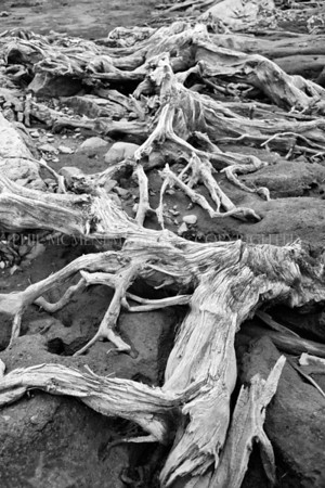 Clatteringshaws Summer (ii)<br /> <br /> Summer and the roots are exposed - like alien forms