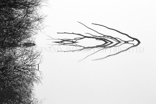 Arrow!<br /> <br /> A partially submerged tree arrows its way though the mist