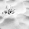 Climbing Out<br /> <br /> Slender grasses escape the clutches of the snow