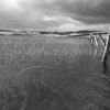 Wild Loch<br /> <br /> A stormy day and the hope that my waders don't leak!