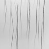 Black and White Reeds<br /> <br /> An atmospheric and emotional image - and probably my most favourite image to date