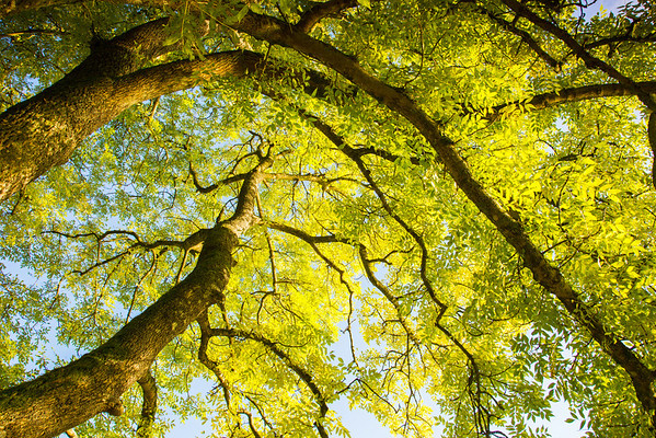 Canopy (i)<br /> <br /> Sometime we looked upwards too!
