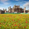 Poppy Castle<br /> <br /> The contrast  between the decrepit and undertaking renovation castle and the sea of flowers!