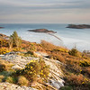 Two Galloway Islands<br /> <br /> Rough and Hestan islands looking good - complete with two Galloway ever-presents gorse and granite.