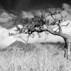 Hawthorn (i)<br /> <br /> Bent by the wind and framing Sgurr Nan Gobhar, a Cuillin outlier, this hawthorn elicits feeling