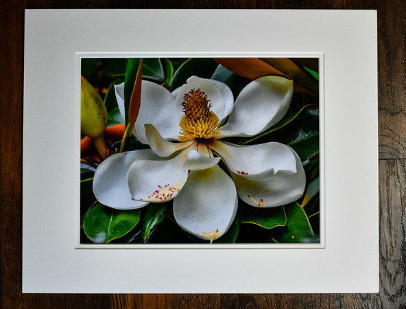 Southern Magnolia printed on archival fine art paper matted to 16 x 20 ready to frame.   $55.00