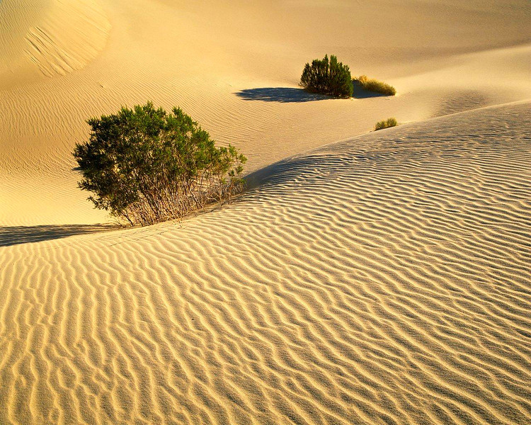 Sand Dunes and Chaparral