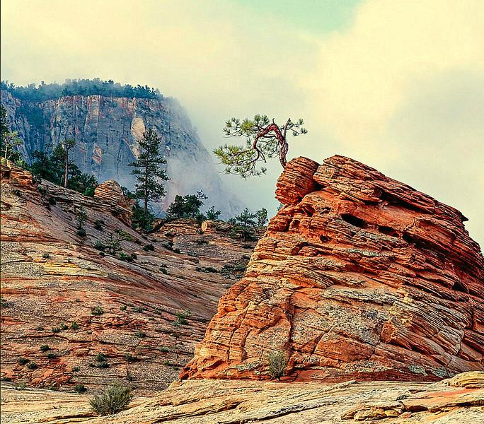Wind Sculptured Pine