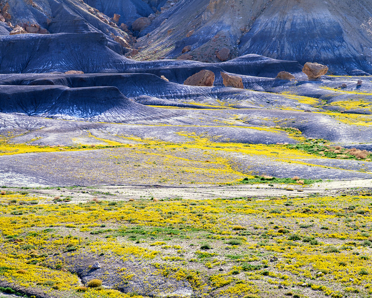 High Desert Wildflowers, Utah