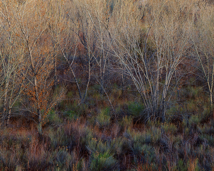 North Blue Flats, Twilight