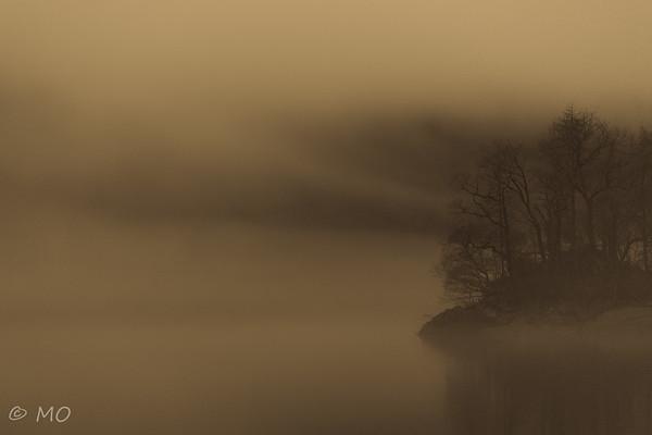 The fog tree