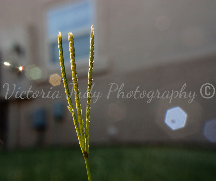 Day 168 - June 17, 2012
