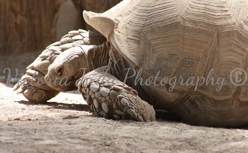 Turtle 2 - Wildlife World Zoo, Arizona - April 2011