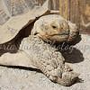 Turtle - Wildlife World Zoo, Arizona - April 2011