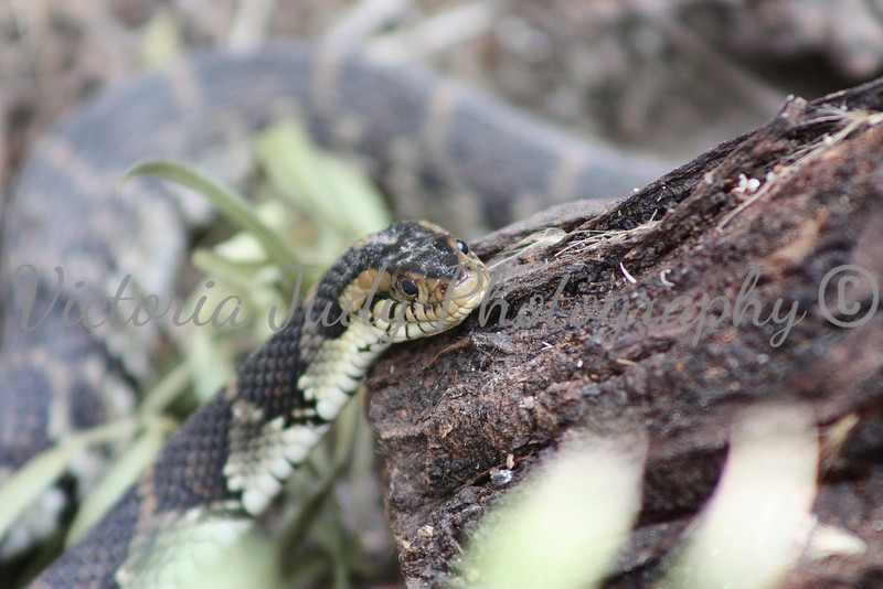 Snake - Wildlife World Zoo, Arizona - April 2011