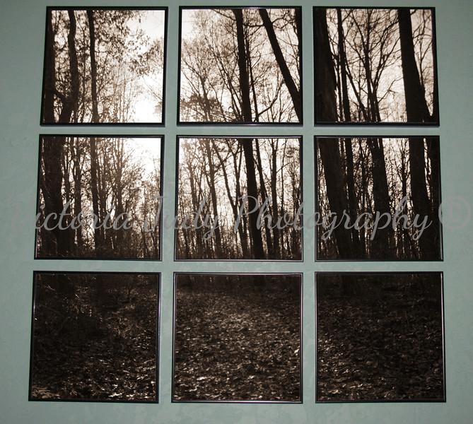 Pennsylvania Woods - 2010