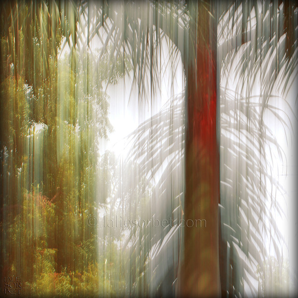 Play of light and movement in the forest. Jeu de lumière et de mouvements dans la forêt.