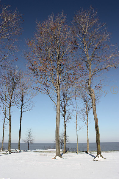 Winter at Lake Erie <br /> <br /> North Springfield, PA - 2009<br /> <br /> (same two trees in the picture to the left)