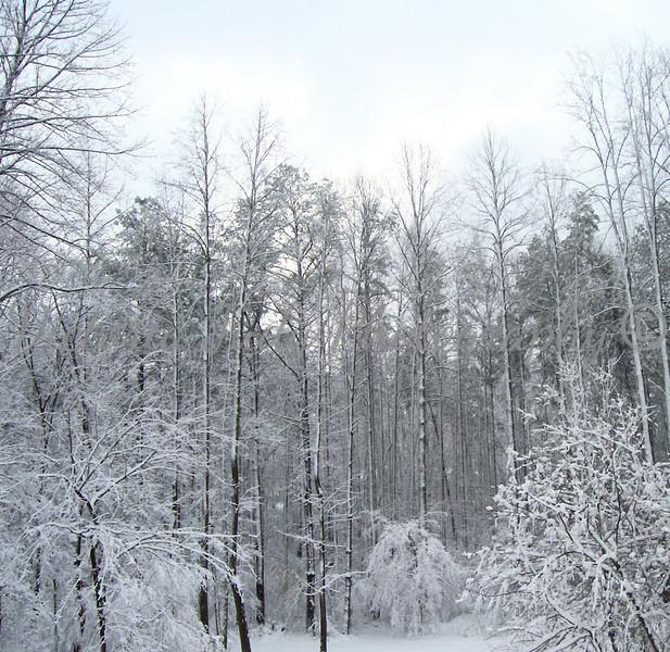 Winter Day <br /> <br /> Mechanicsville, Maryland - 2006