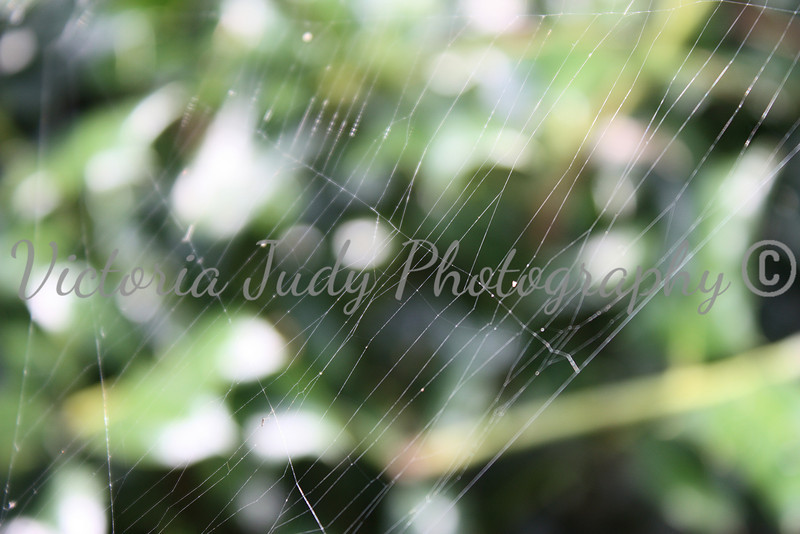 Spiderweb<br /> <br /> Outer Banks, North Carolina - 2010