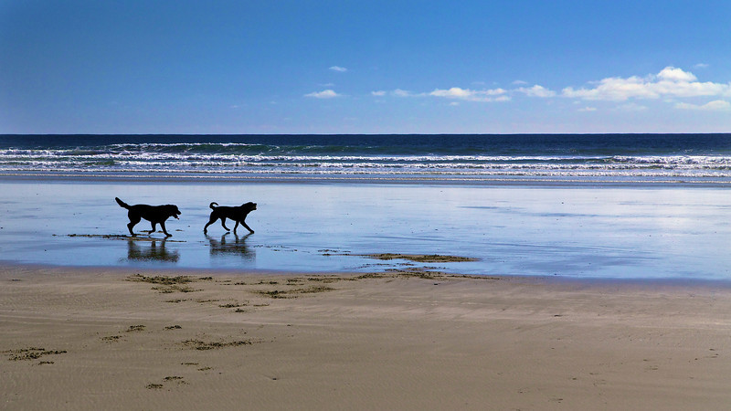 Dog's Day on Beach