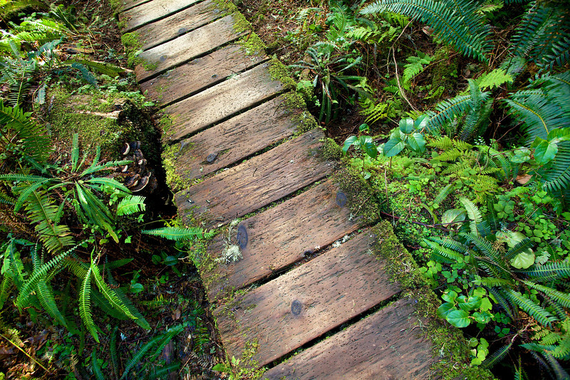 Path in Rain Forest