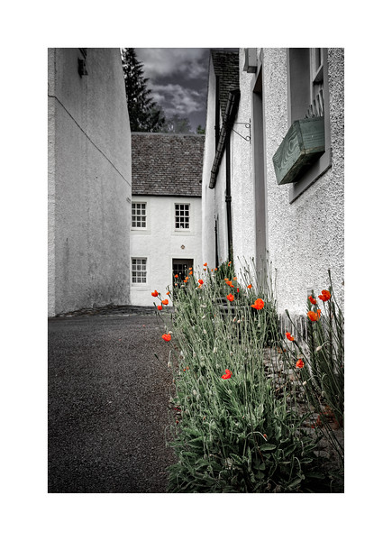 Poppies of Dunkeld 01