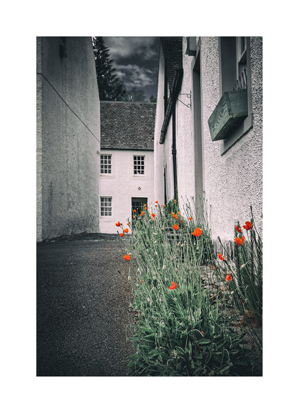 Poppies of Dunkeld 02