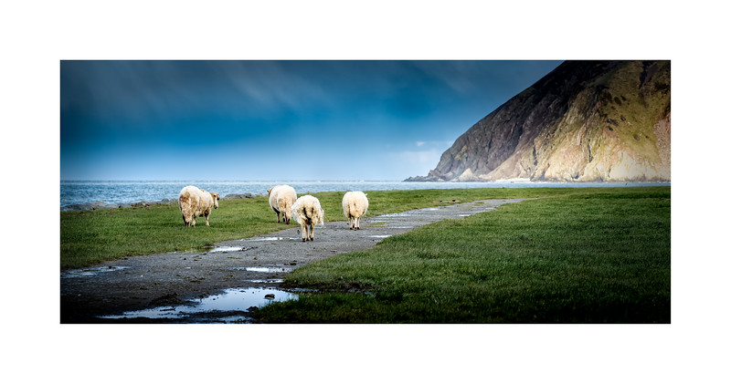 Hill Sheep outing at the Coast