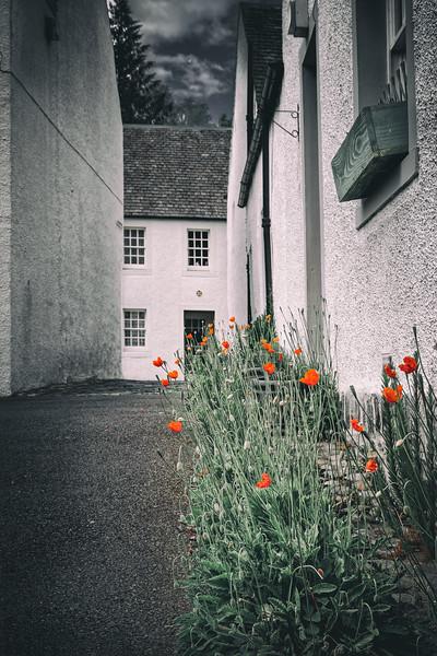 Poppies of Dunkeld 02