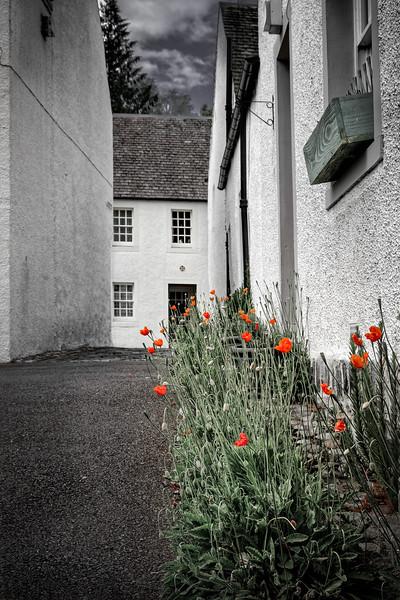 Poppies of Dunkeld 01