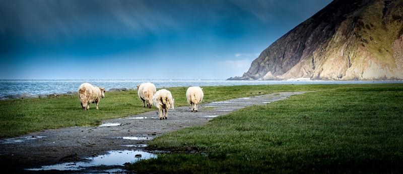 Hill Sheep outing at the Coast