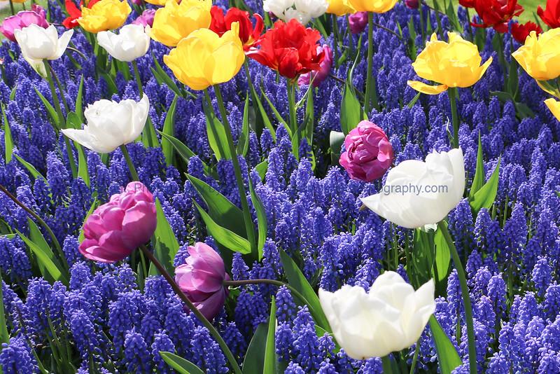 Dutch Flower Garden
